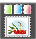 Postage stamp with ashberry. Stock Photo