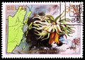 Postage stamp printed in Belize shows Pink-tipped Anemone (Condylactis gigantea), 1st anniversary of Independence serie, circa Royalty Free Stock Photo