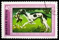 Postage stamp printed in Hungary shows Hungarian Greyhound (Canis lupus familiaris), Hounds serie, circa 1972