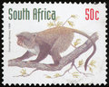 Postage stamp - South Africa Royalty Free Stock Photo