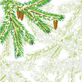 Postcard with fir tree Royalty Free Stock Image