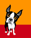 Poster layout with boston terrier funny drawing of a curious Stock Photos
