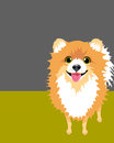 Poster layout with pomeranian dog drawing of funny viewed from above Royalty Free Stock Photo