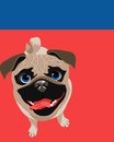 Poster layout with pug dog vector drawing of funny little viewed from above Stock Photography