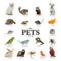 Poster of pets in english isolated on white Royalty Free Stock Photography