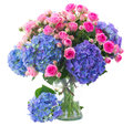 Posy of pink roses and blue hortensia flowers close up fresh hortenzia in glass vase isolated on white background Stock Images