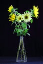 Posy small sunflowers vase set against black background Royalty Free Stock Photo