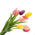 Posy of tulips flowers close up spring isolated on white background Royalty Free Stock Image