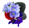 Posy of violets, pansies and ranunculus Royalty Free Stock Photo