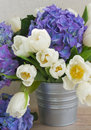 Posy of white tulips and blue hortensia flowers close up Stock Photography