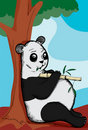 Pot Bellied Panda Royalty Free Stock Photo