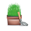 Pot with growing grass and shoval isolated on white Royalty Free Stock Images