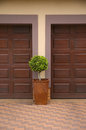 Pot plant inbetween two garage doors Royalty Free Stock Images