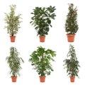 Pot plants Royalty Free Stock Photo