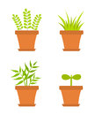 Pot plants growing in pots vector illustration Royalty Free Stock Images