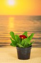 Pot with a primula on bamboo cloth against the sea Stock Photo