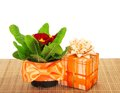Pot with a primula on bamboo cloth and the gift box isolated white Stock Images
