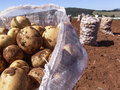 Potato bag in field brazil Stock Image