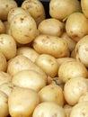 Potato big bunch of yellow potatoes at market Stock Images