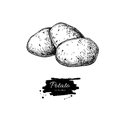 Potato drawing. Isolated potatoes heap. Vegetable engrave