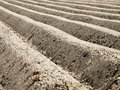 Potato field at an early stage with a blue sky Royalty Free Stock Photos