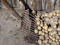 Potato fork special gardening tool for loading Stock Images