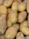 Potato fresh vegetable with yellow color shown as featured color and shape raw and fresh fruit and nutrition Royalty Free Stock Photos