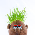 Potato head with grass sad looking hair Stock Image