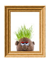 Potato head with grass sad looking hair in a wooden frame Royalty Free Stock Images