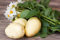 Potato with leaves and flowers Royalty Free Stock Photo