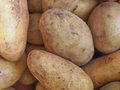 Potato vegetable raw potatoes starchy tuberous vegetables healthy vegetarian food Royalty Free Stock Photography