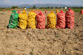 Potatoes bags transport to market Royalty Free Stock Images