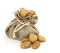 Potatoes in a burlap sack Royalty Free Stock Photo