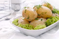 Potatoes with dill boiled on green salad leaves Royalty Free Stock Photos