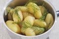 Potatoes with dill in a steel pot Royalty Free Stock Images