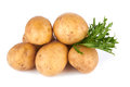 Potatoes fresh on a white background Royalty Free Stock Photo