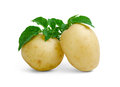 Potatoes with leaves fresh green on white background Stock Image
