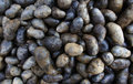 Potatoess preto Imagem de Stock Royalty Free