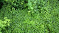 Potherb background outdoors photography of green bushes Stock Photography