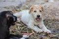 A potrait dog Royalty Free Stock Photo
