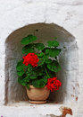 Pots with red geraniums on the window