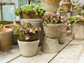 Pots with sedum plants Stock Image