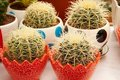 Potted cactus Royalty Free Stock Photo