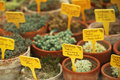 Potted cactus plants defocused background Royalty Free Stock Photos