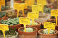 Potted cactus plants defocused background Royalty Free Stock Photography