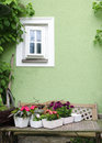 Potted flowes in house garden rustic table with flower plants by the green wall with small white window Stock Photography