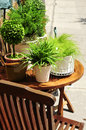 Potted green plants Stock Photo