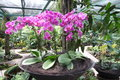 Potted pink orchid garden arrangement on public display Stock Images