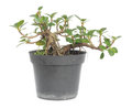 Potted plant Stock Images
