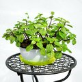 Potted plant on decorative iron stand. Royalty Free Stock Photo